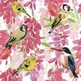 Αφηρημένα χρωματισμένα χέρι υπόβαθρα watercolor με τα πουλιά και τα λουλούδια, Στοκ Εικόνες