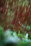 Αφηρημένα χρώματα φθινοπώρου Στοκ Εικόνες