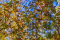 αφηρημένα χρώματα Στοκ εικόνα με δικαίωμα ελεύθερης χρήσης