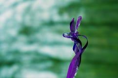 Αφηρημένα Twirls κινούνται σπειροειδώς σγουρό αντικείμενο με το μουτζουρωμένο υπόβαθρο Στοκ εικόνες με δικαίωμα ελεύθερης χρήσης