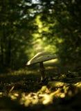 Αφηρημένες ανασκοπήσεις φαντασίας με το μαγικό βιβλίο Στοκ Φωτογραφίες