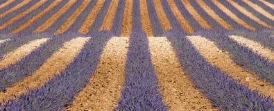 Αφηρημένες γραμμές lavender Στοκ Φωτογραφίες