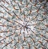 Αφηρημένες λεπτομέρειες ενός κάκτου Mammillaria Στοκ Φωτογραφίες
