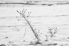 Αφηρημένες μορφές χιονιού με τις εγκαταστάσεις Στοκ Εικόνα