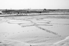 Αφηρημένες μορφές χιονιού με τις εγκαταστάσεις Στοκ φωτογραφίες με δικαίωμα ελεύθερης χρήσης