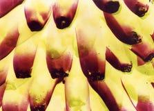 αφηρημένες μπανάνες Στοκ Φωτογραφίες
