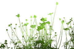 αφηρημένες συστάσεις λουλουδιών β ελεύθερη απεικόνιση δικαιώματος