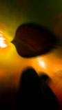 Αφηρημένες φωτογραφίες μέσα στο θολωμένο περίληψη ζουμ φωτογραφιών ενυδρείων Πολλά χρώματα Στοκ Εικόνες