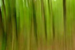 Αφηρημένη άποψη βράσης του δάσους Στοκ Εικόνες