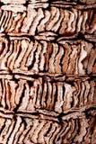 αφηρημένη ανασκόπηση ξύλινη Στοκ Εικόνες