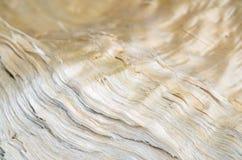αφηρημένη ανασκόπηση ξύλινη Στοκ Φωτογραφίες