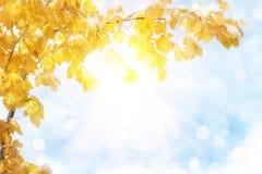 αφηρημένη ανασκόπηση φθινο&p Στοκ Εικόνα
