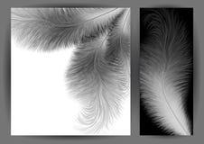 Αφηρημένη ανασκόπηση φτερών Στοκ φωτογραφία με δικαίωμα ελεύθερης χρήσης