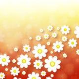 αφηρημένη ανασκόπηση chamomiles Στοκ φωτογραφία με δικαίωμα ελεύθερης χρήσης