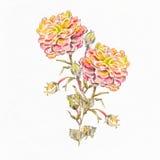 Αφηρημένη ανασκόπηση Watercolor albion Στοκ φωτογραφίες με δικαίωμα ελεύθερης χρήσης