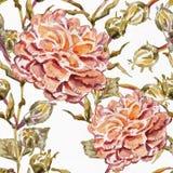 Αφηρημένη ανασκόπηση Watercolor albion Στοκ Φωτογραφία