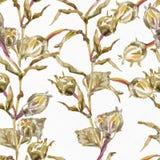 Αφηρημένη ανασκόπηση Watercolor albion Στοκ εικόνα με δικαίωμα ελεύθερης χρήσης