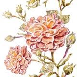 Αφηρημένη ανασκόπηση Watercolor albion Στοκ φωτογραφία με δικαίωμα ελεύθερης χρήσης