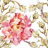 Αφηρημένη ανασκόπηση Watercolor albion Στοκ Εικόνες