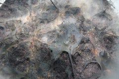 Αφηρημένη απεικόνιση υποβάθρου υποβάθρου Bakteria Στοκ φωτογραφίες με δικαίωμα ελεύθερης χρήσης