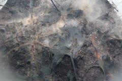Αφηρημένη απεικόνιση υποβάθρου υποβάθρου Bakteria Στοκ Εικόνα
