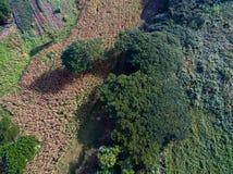 Αφηρημένη εναέρια άποψη των πράσινων δέντρων και του κίτρινου αγροκτήματος καλαμποκιού στοκ εικόνα με δικαίωμα ελεύθερης χρήσης