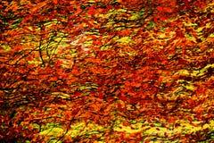 Αφηρημένη ζωγραφική φύλλων φθινοπώρου Στοκ Εικόνα