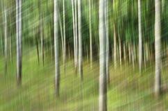 Αφηρημένη θαμπάδα κινήσεων, κορμός δέντρων & άδεια, κιτρινοπράσινο backgrou στοκ φωτογραφίες με δικαίωμα ελεύθερης χρήσης