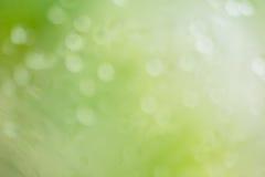 Αφηρημένη θαμπάδα με το bokhe του φωτός μέσω της διάθεσης δέντρων απομονωμένου Στοκ Εικόνες