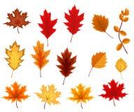 Αφηρημένη διανυσματική απεικόνιση με τα μειωμένα φύλλα φθινοπώρου Στοκ φωτογραφίες με δικαίωμα ελεύθερης χρήσης
