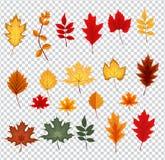 Αφηρημένη διανυσματική απεικόνιση με τα μειωμένα φύλλα φθινοπώρου Στοκ Εικόνες
