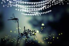 Αφηρημένη και μαγική εικόνα της σκιαγραφίας και Firefly λιβελλουλών που πετούν στη δασική έννοια παραμυθιού νύχτας Στοκ φωτογραφία με δικαίωμα ελεύθερης χρήσης