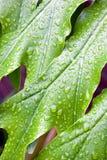 Αφηρημένη κινηματογράφηση σε πρώτο πλάνο του φύλλου πράσινου φυτού με τα σταγονίδια νερού Στοκ φωτογραφίες με δικαίωμα ελεύθερης χρήσης