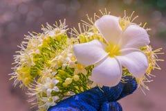 Αφηρημένη μαλακή θολωμένη και μαλακή σύσταση επιφάνειας εστίασης Frangipani, Plumeria, λουλούδι και Anan, Tembusu, Fagraea fragra Στοκ Εικόνα