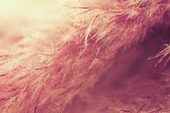 αφηρημένη πορφύρα φτερών ανασκόπησης Μακρο βλαστός στούντιο Στοκ εικόνες με δικαίωμα ελεύθερης χρήσης
