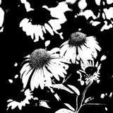 αφηρημένη πορφύρα echinachea coneflower ελεύθερη απεικόνιση δικαιώματος