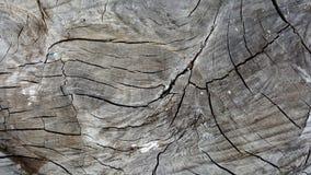Αφηρημένη σύσταση δέντρων Στοκ εικόνα με δικαίωμα ελεύθερης χρήσης