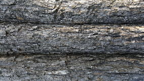 Αφηρημένη σύσταση δέντρων Στοκ Εικόνες