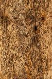 Αφηρημένη σύσταση ανασκόπησης Driftwood - που φοριέται, χτυπημένος, φυσικός Στοκ Φωτογραφίες