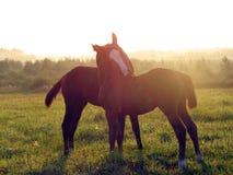 αφηρημένη φυσική θερινή ταπετσαρία πρωινού Άλογα Στοκ φωτογραφία με δικαίωμα ελεύθερης χρήσης
