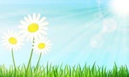 αφηρημένη φυσική θερινή ταπετσαρία πρωινού Μαργαρίτες στην πράσινη χλόη Στοκ Φωτογραφίες