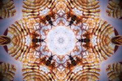 Αφηρημένη φωτογραφία mandala κοχυλιών θάλασσας Στοκ φωτογραφία με δικαίωμα ελεύθερης χρήσης