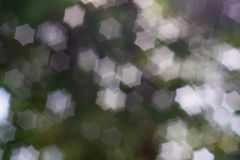 αφηρημένη φύση ανασκόπησης Στοκ Φωτογραφίες