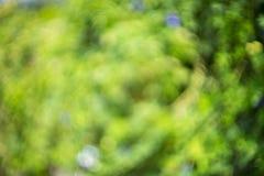 αφηρημένη φύση ανασκόπησης Στοκ εικόνες με δικαίωμα ελεύθερης χρήσης