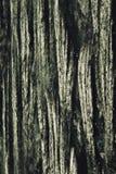 Αφηρημένη φύση Στοκ εικόνες με δικαίωμα ελεύθερης χρήσης