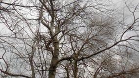 Αφηρημένη χειμερινή φύση όμορφο δάσος ανασκόπησης οι ακτίνες ανασκόπησης κλείνουν να καταρρίψουν το δέντρο επάνω Τοπίο φύσης ξύλω Στοκ Εικόνες