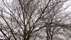 Αφηρημένη χειμερινή φύση όμορφο δάσος ανασκόπησης οι ακτίνες ανασκόπησης κλείνουν να καταρρίψουν το δέντρο επάνω Τοπίο φύσης ξύλω Στοκ φωτογραφία με δικαίωμα ελεύθερης χρήσης