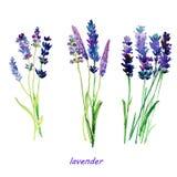 Αφηρημένη χρωματισμένη χέρι κάρτα watercolor με lavender Στοκ φωτογραφία με δικαίωμα ελεύθερης χρήσης