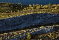 Αφηρημένοι βράχοι και δέντρα Στοκ Φωτογραφίες