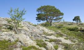 Αφηρημένοι κλάδοι και φύλλα Στοκ Εικόνες